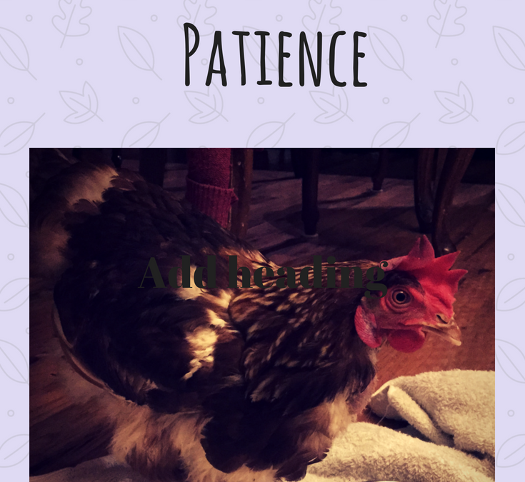 Cultivating Patience